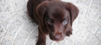 Tutela degli animali - Anagrafe canina