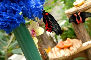 Collodi Butterfly House